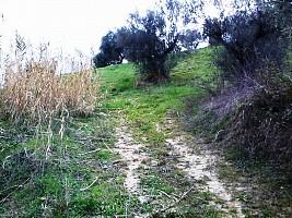 Terreno Agricolo in vendita  Casalincontrada (CH)