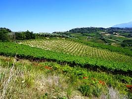 Terreno Agricolo in vendita contrada santo stefano Ripa Teatina (CH)