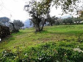 Terreno Agricolo in vendita via alento strada comunale Casalincontrada (CH)