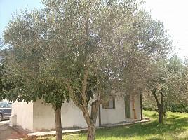 Porzione di casa in vendita c.da sant elena Ortona (CH)