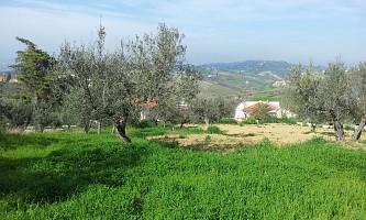 Terreno Edificabile Res. in vendita lungo la provinciale Chieti Casalicontra Casalincontrada (CH)