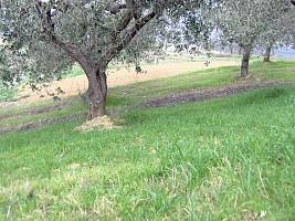Terreno Agricolo in vendita via delle more Casalincontrada (CH)