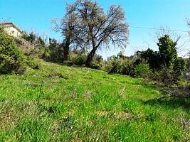 Terreno Agricolo in vendita strada massantonio, zona villa pini Chieti (CH)