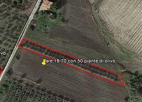 Terreno Agricolo in vendita Contrada Montalfano Cupello (CH)