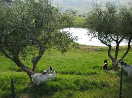 Terreno Agricolo in vendita  Bucchianico (CH)