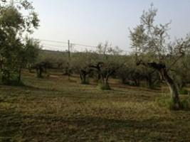 Terreno Edificabile Res. in vendita contrada Sterparo dei Santi Moscufo (PE)