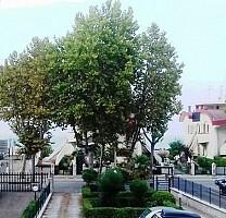 Appartamento in vendita V.le Alcione 135/A Francavilla al Mare Francavilla al Mare (CH)