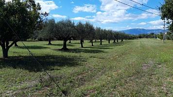 Terreno Edificabile Res. in vendita via Forlani Cepagatti (PE)