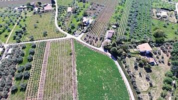 Terreno Agricolo in vendita  Ortona (CH)