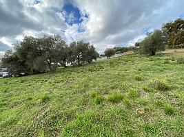 Terreno Edificabile Res. in vendita via palermo Torrevecchia Teatina (CH)