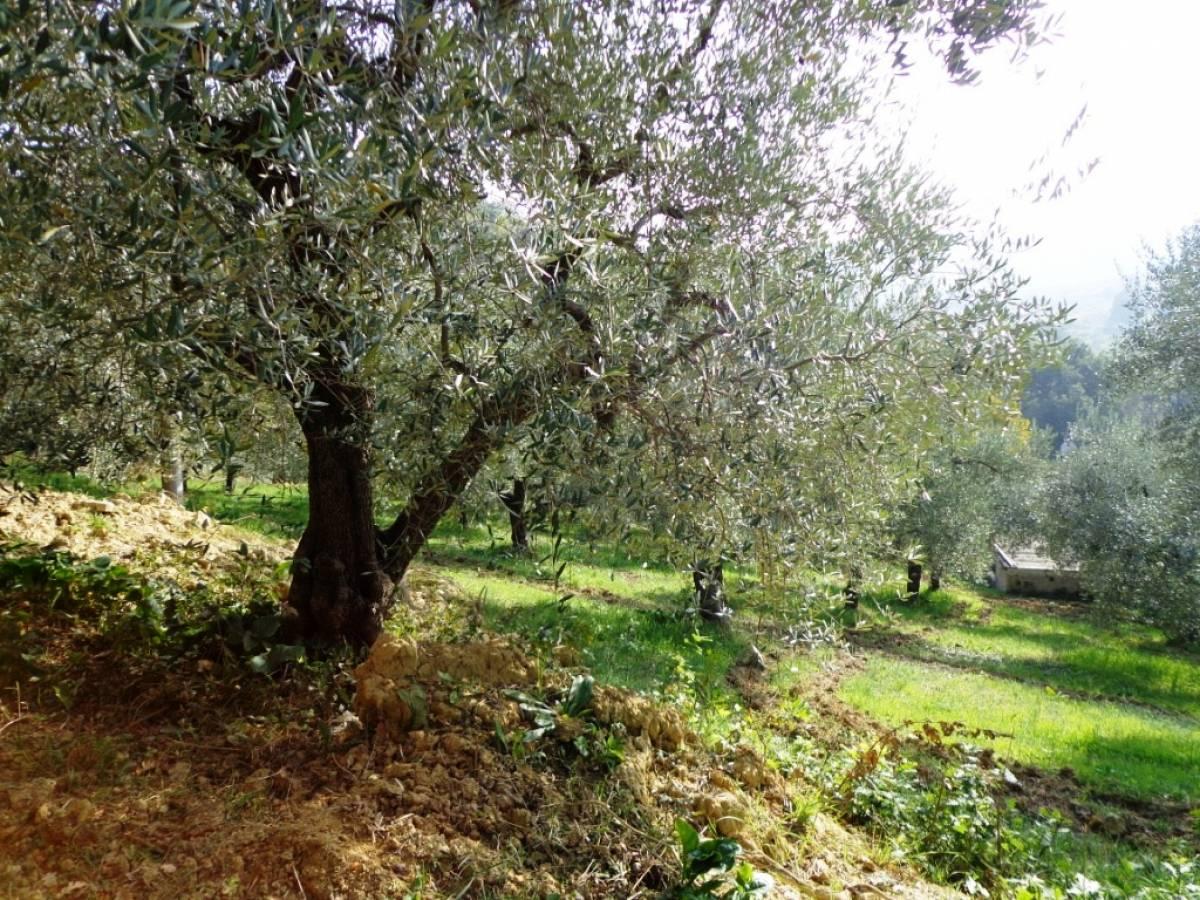 Terreno Agricolo in vendita in  zona Tricalle a Chieti - 406297 foto 6