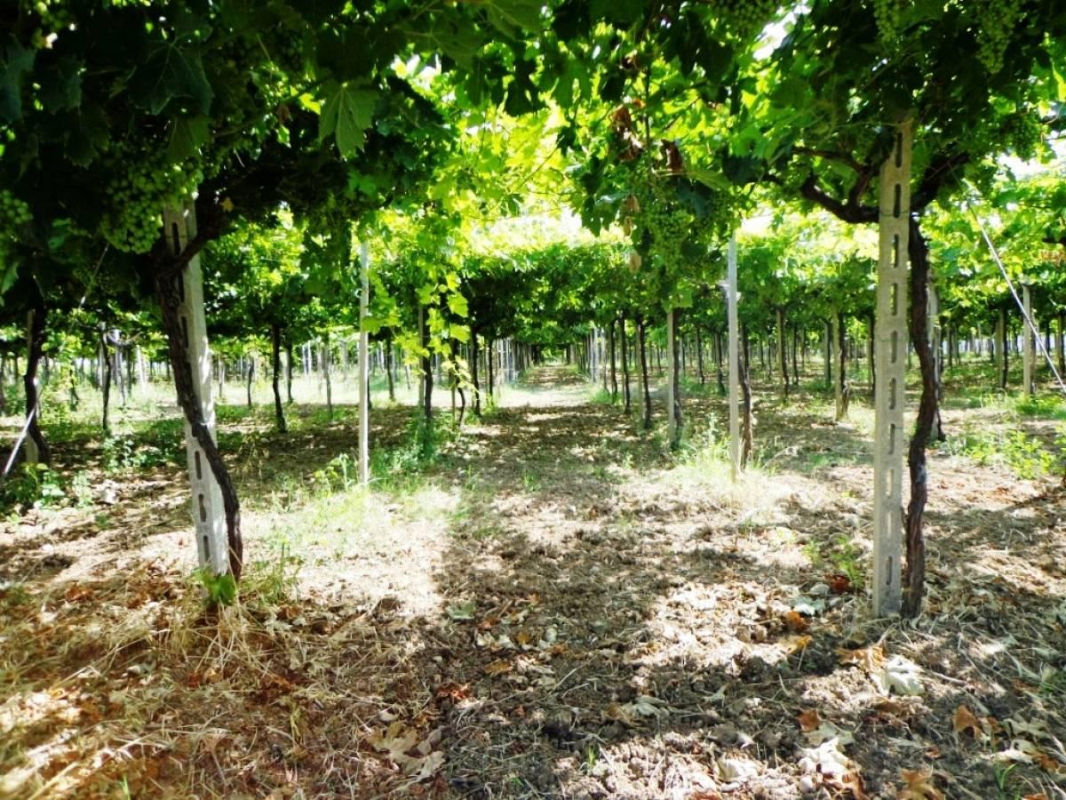 Terreno agricolo in vendita in contrada sciutico a san for Case in vendita san vito chietino