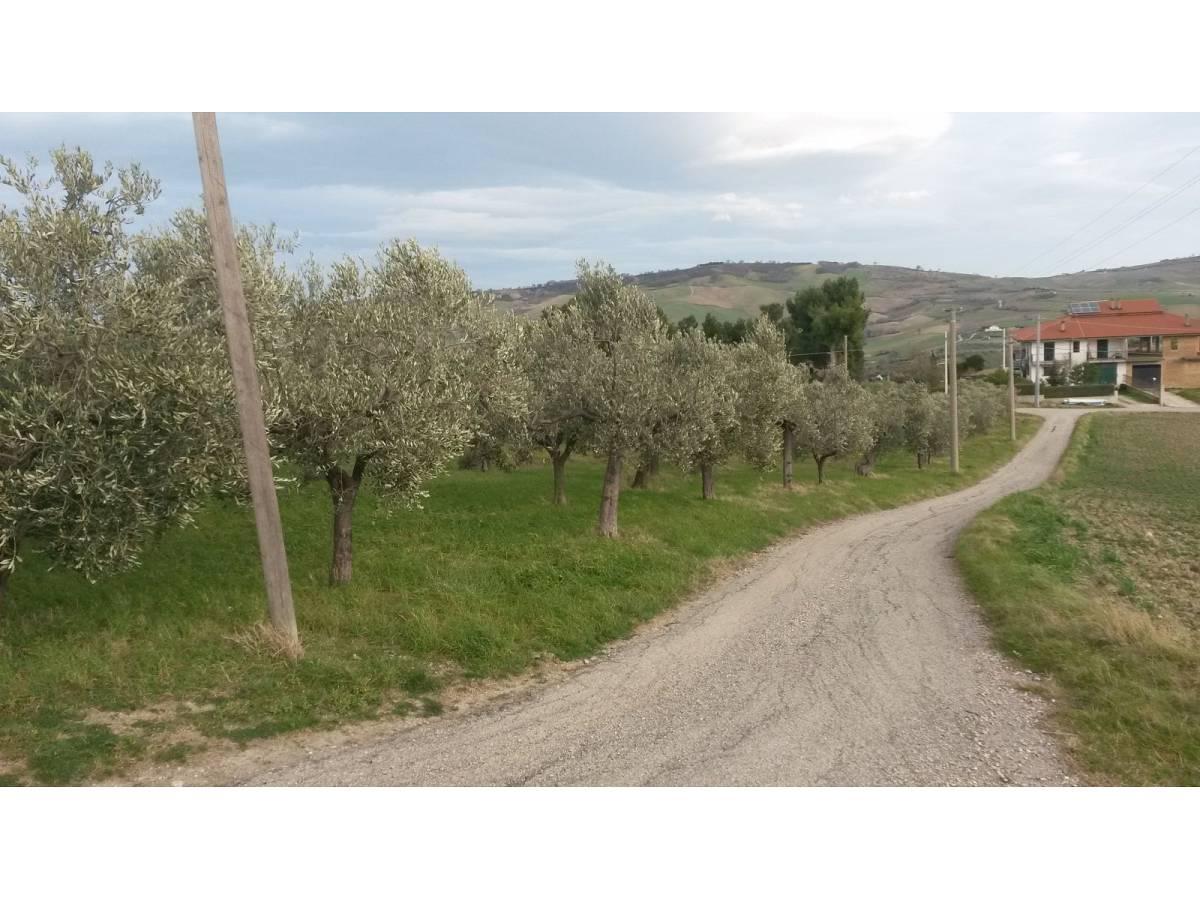Terreno Agricolo in vendita in contrada colle delle ginestre  a Montenero di Bisaccia - 349047 foto 8