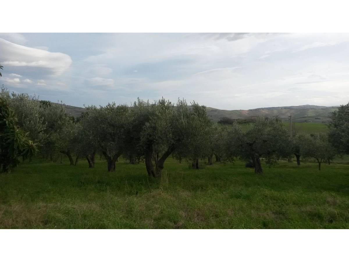 Terreno Agricolo in vendita in contrada colle delle ginestre  a Montenero di Bisaccia - 349047 foto 7