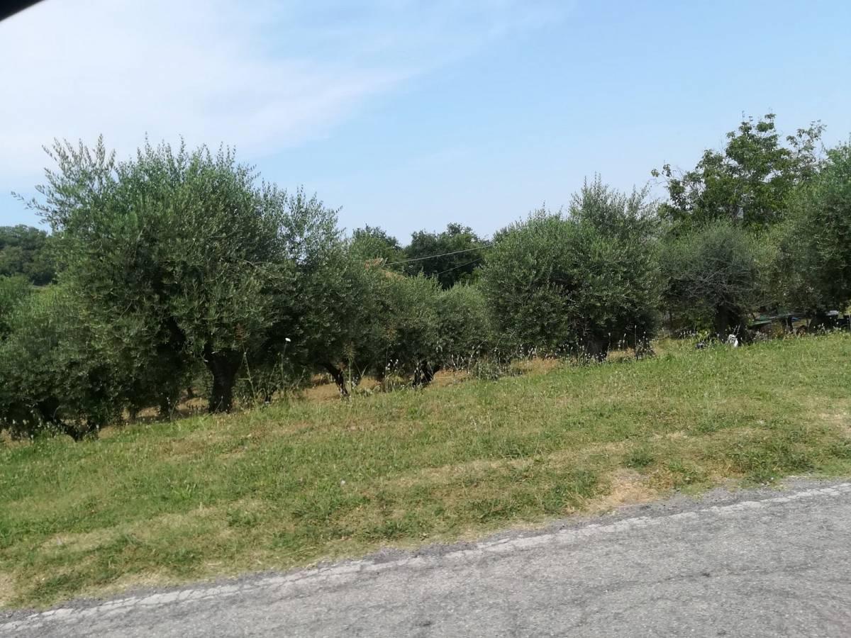 Terreno Edificabile Res. in vendita in colle spaccato  a Bucchianico - 170539 foto 5