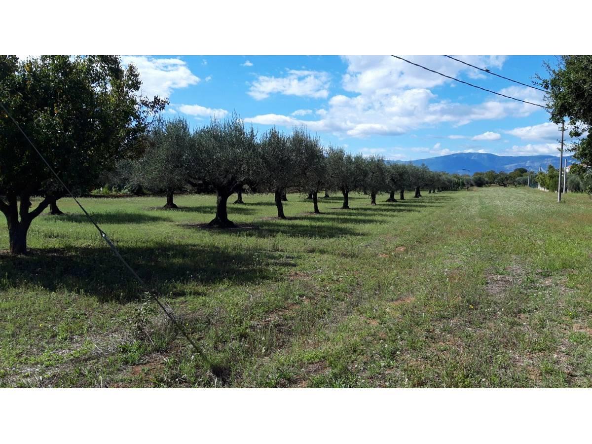 Terreno Edificabile Res. in vendita in via Forlani  a Cepagatti - 3407816 foto 1