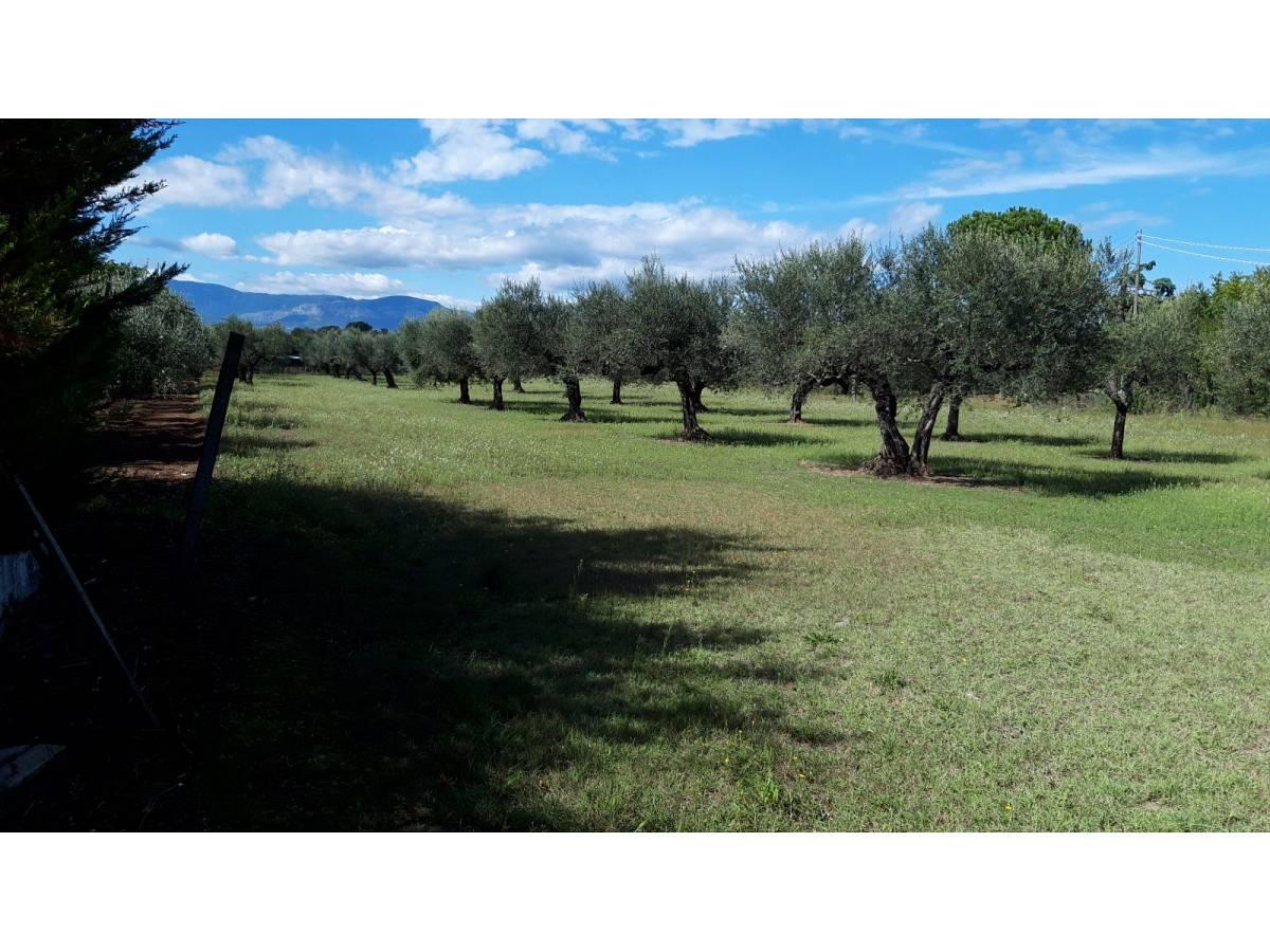 Terreno Edificabile Res. in vendita in via Forlani  a Cepagatti - 3407816 foto 2