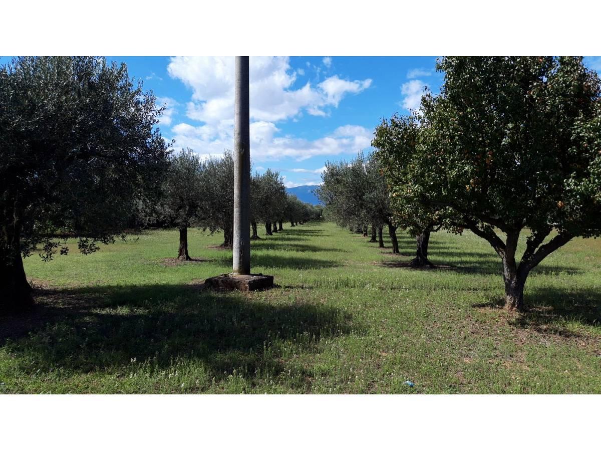 Terreno Edificabile Res. in vendita in via Forlani  a Cepagatti - 3407816 foto 3