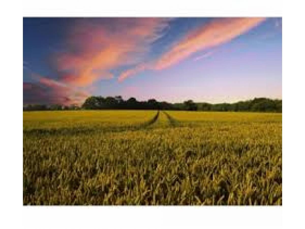 Terreno Agricolo in vendita in Strada San Salvatore zona San Salvatore a Chieti - 6825393 foto 4