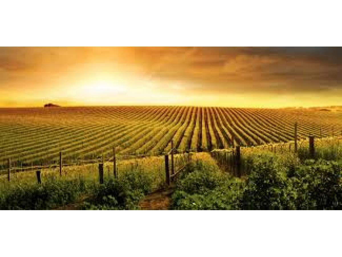 Terreno Agricolo in vendita in Strada San Salvatore zona San Salvatore a Chieti - 6825393 foto 6